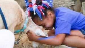 Petting Farm