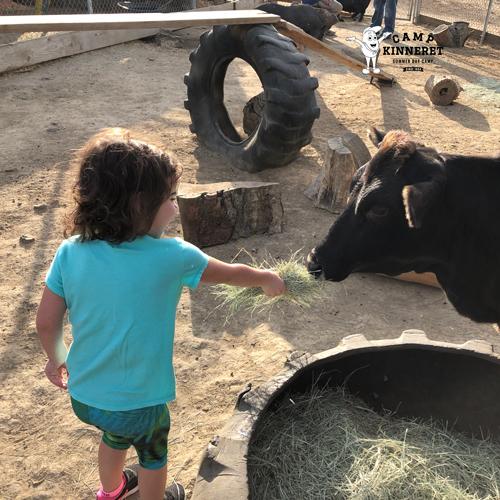 Ryan's daughter feeding Brownie